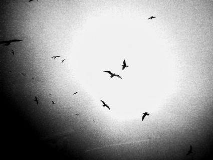 birdbird.jpg