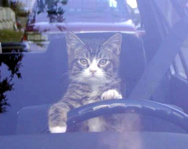 cat-driver.jpg