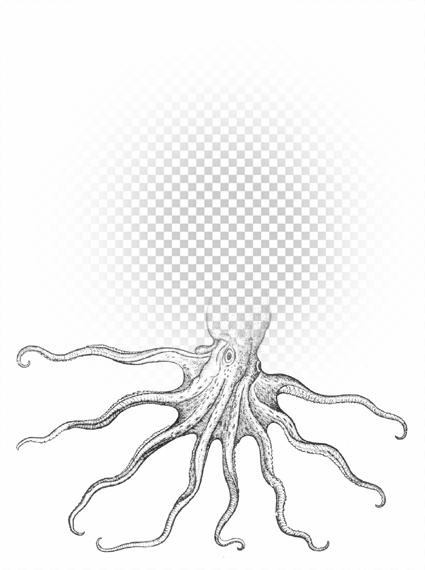 octopus00.jpg