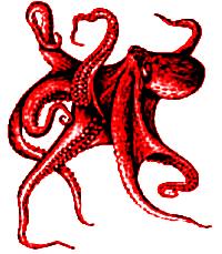 octopus02.jpg